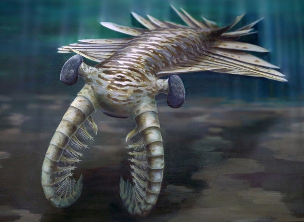Scary 515 million-year-old predator had better vision than almost any animal alive today