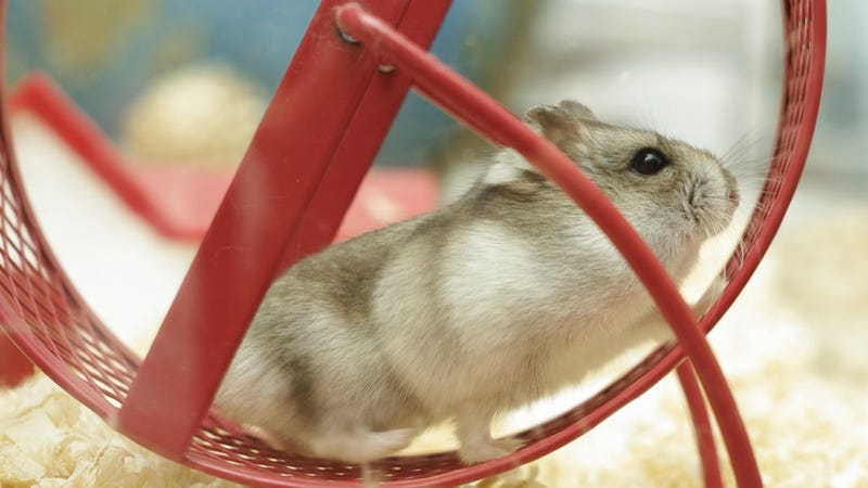 London Police Rescue Hamster After It Falls 12 Feet, Escapes Chasing Cat