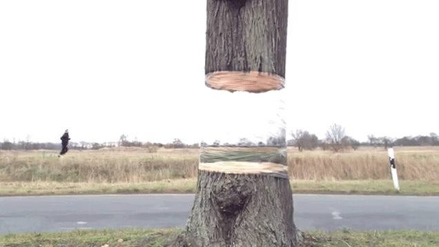 Magical tree appears to be invisibly hovering over its tree trunk