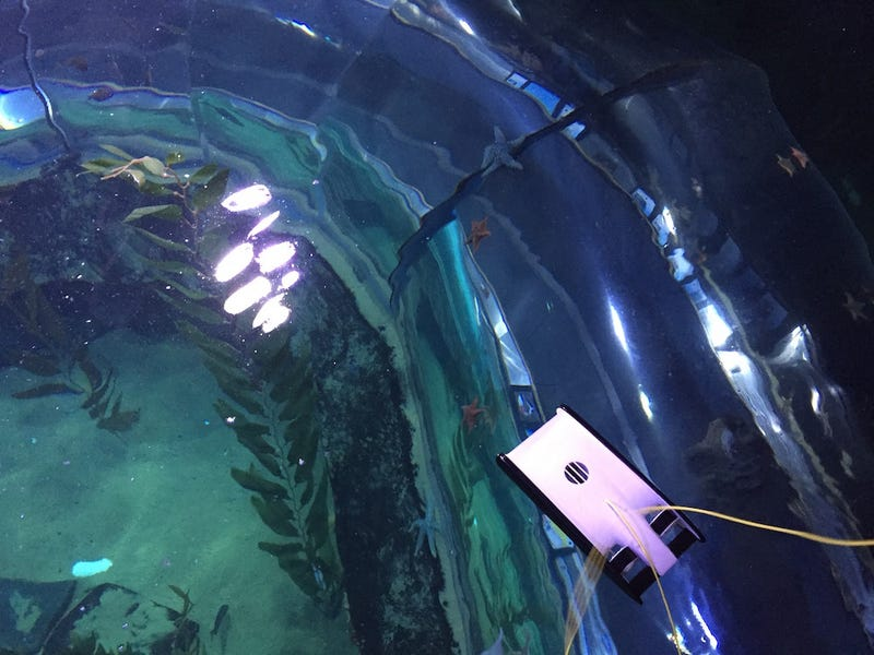 New, Ultrafast Swimming Drones Are Tiny Ocean Explorers