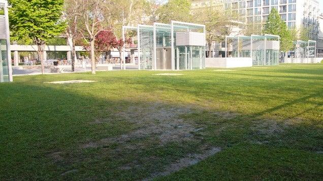 Egy hétig bírta az Erzsébet téren a fű