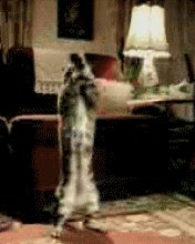 Gifs with a g like in goat