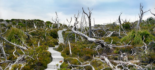 Chat with the Woman Who Photographs the World's Oldest Living Things
