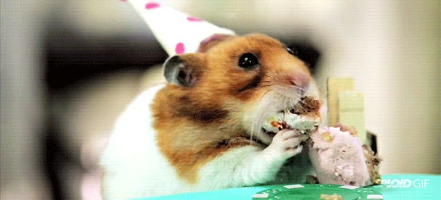 Tiny hamsters eat tiny cakes for a super silly tiny birthday party