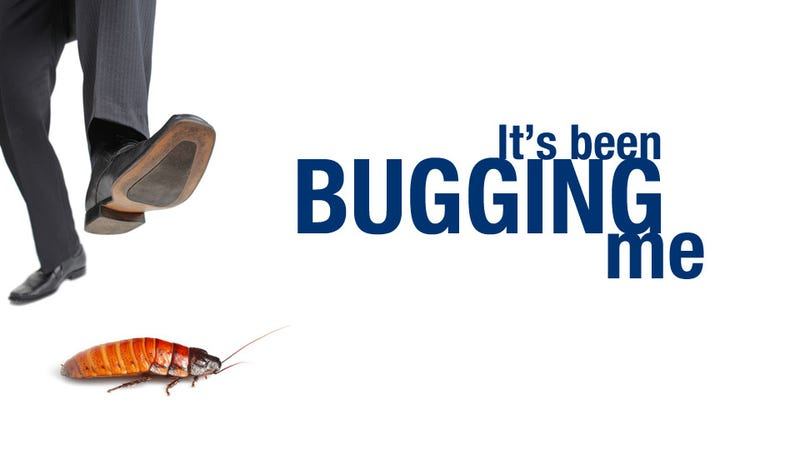 World's Most Conscientious Internet User Asks: Is It OK to Kill Bugs?