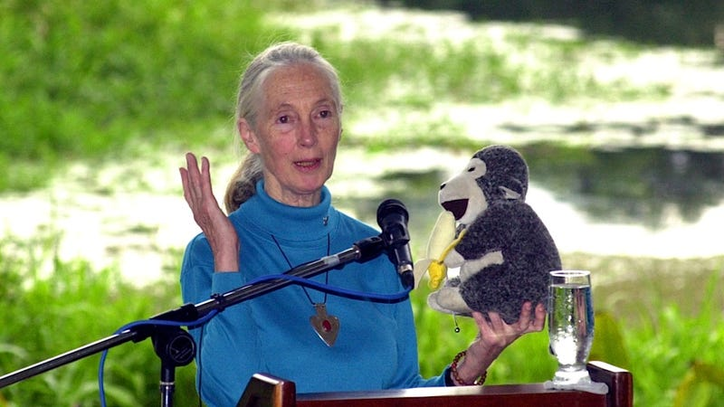 Jane Goodall's New Book Is a Little Bit Plagiarized