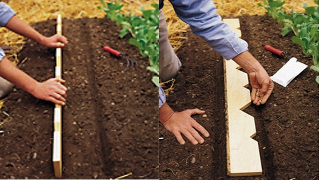 DIY Planter's Yardstick Helps Properly Space Seeds and Seedlings
