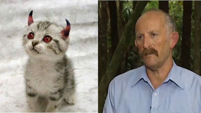 'Your Cat Is Not Innocent': New Zealand Man Launches Campaign to Rid Country of Cats