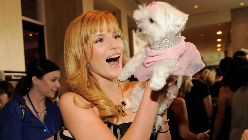 Bella Thorne and This Fancy Dog Are Delighted to Meet Each Other