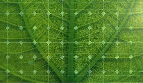 Self-renewing solar cells grow like plants