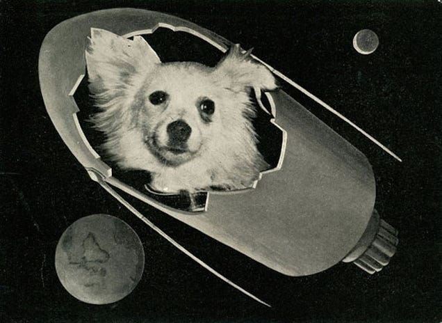 The Tragic Tale of the Soviet Space Dogs