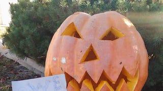 Pumpkin Contest Round 2