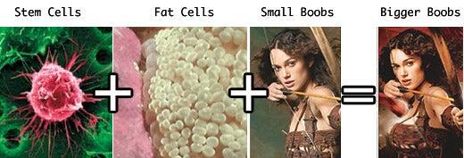 Stem Cells Key to Bigger Boobies