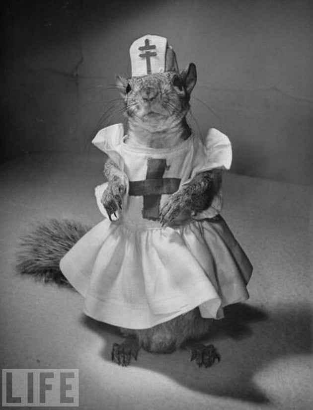 The Surprisingly Well-Dressed 1940s Squirrel