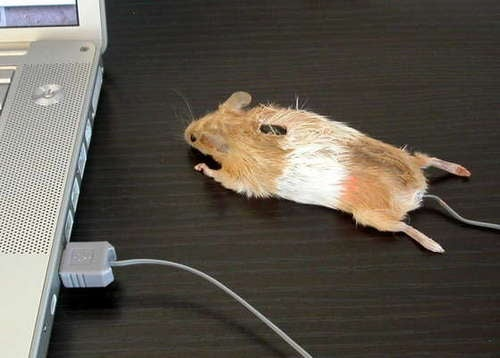 The Real Mouse, Mouse