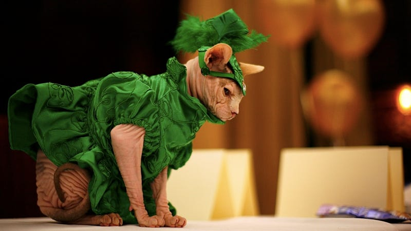 Cats Infiltrate the Fashion Industry in Phase Two of World Domination Plan