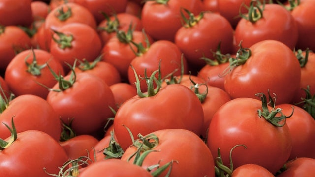 Genetically modified tomatoes could save you from heart disease