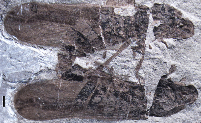 These insects died while having sex 165 million years ago