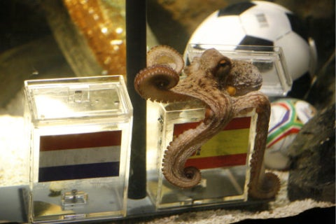 Paul The Psychic Octopus Caught Up In Transfer Battle