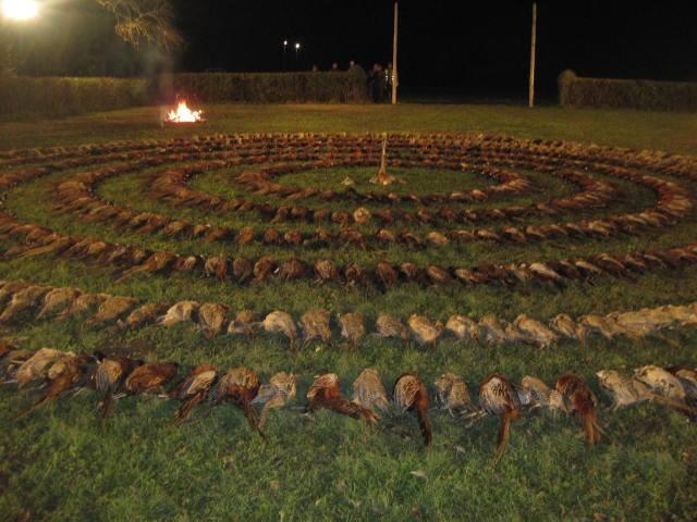 913 lelőtt állat, fenéken pálcázás - így mulat egy fideszes magyar úr