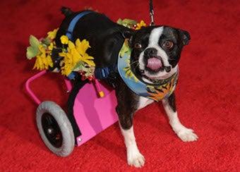 Backup Plan? Bring Adorable Dog To Premiere!