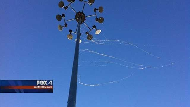 Dallas Woke Up This Morning to Spiders Everywhere