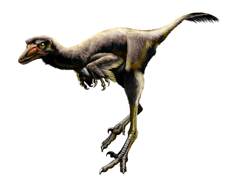 Recently discovered species of raptor validates the fears of anyone who ever watched Jurassic Park