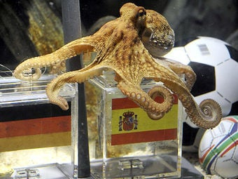 Iranian President Declares War on Psychic Octopus