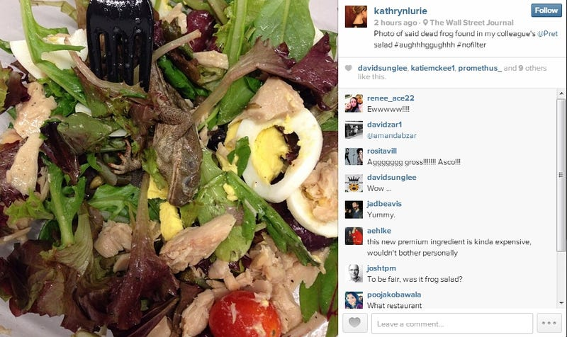 Dead Frog in Woman's Pret a Manger Salad Ruins Everyone's Appetite