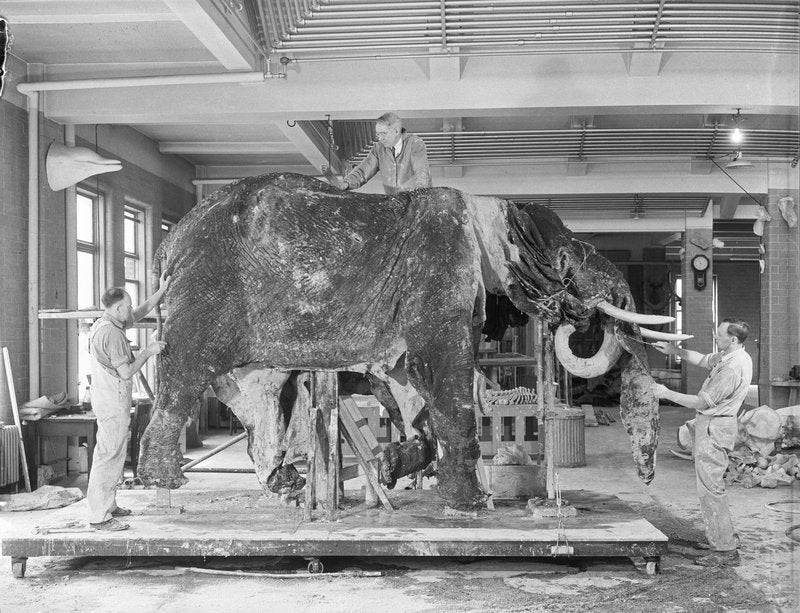Operation Dumbo Drop Gone Terribly Wrong: How to clean a giant elephant skin