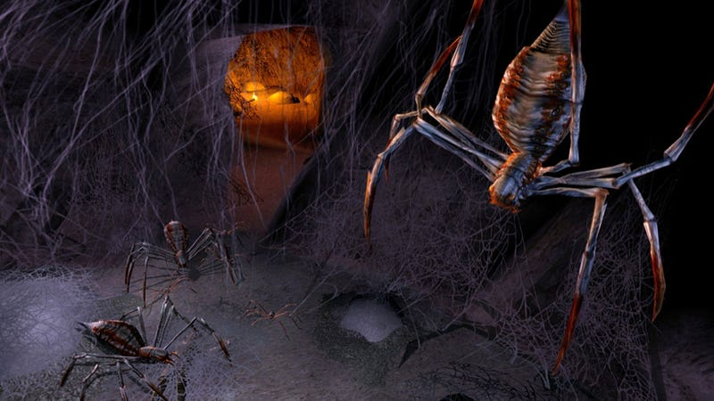 Researchers create a deadly spider Thunderdome — for science