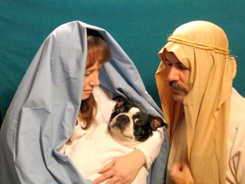 Pets Make Family Portraits Even More Awkward