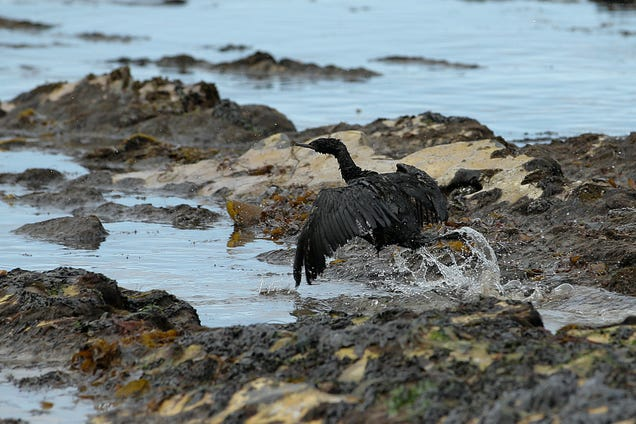 Santa Barbara Still Reeling From the Worst Oil Spill in Decades