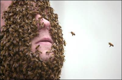 Plague Of Insects Descends Upon Scott Boras' Angel Stadium Suite