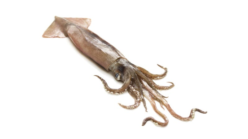 What the Hell, A Live Bomb Was Found Inside a Squid's Stomach