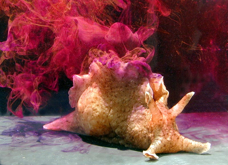 Sea Hare Ink Is One of Nature's Most Unusual Bioweapons