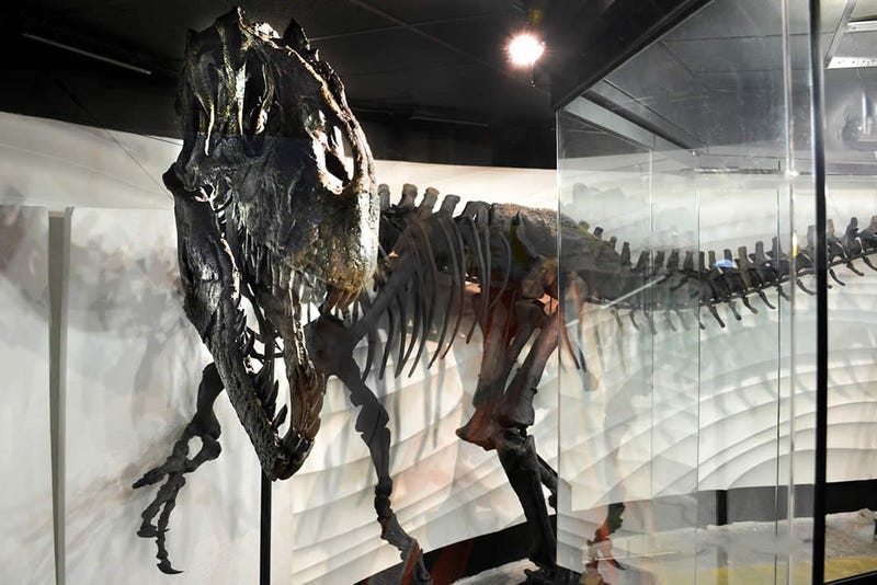 "Ebenezer, the Creation ""Museum"", and dinosaur private ownership"