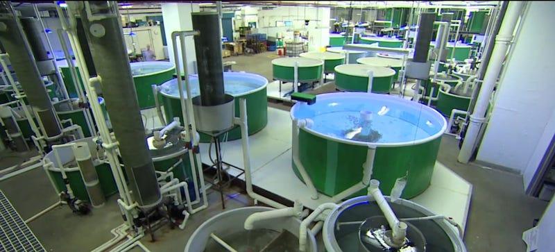 Tour the Fish Farm Hidden in a Hong Kong High-Rise