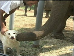 Elephant Nurses Best Dog Friend Back To Health
