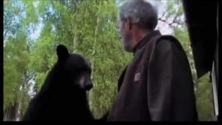 This Guy Fuckin' Slapped A Bear And Got Away With It. Unbelievable.