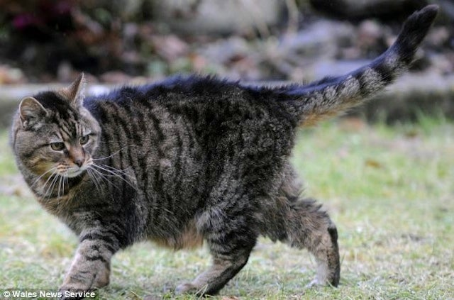 39-Year-Old Lucy Is The World's Oldest Cat