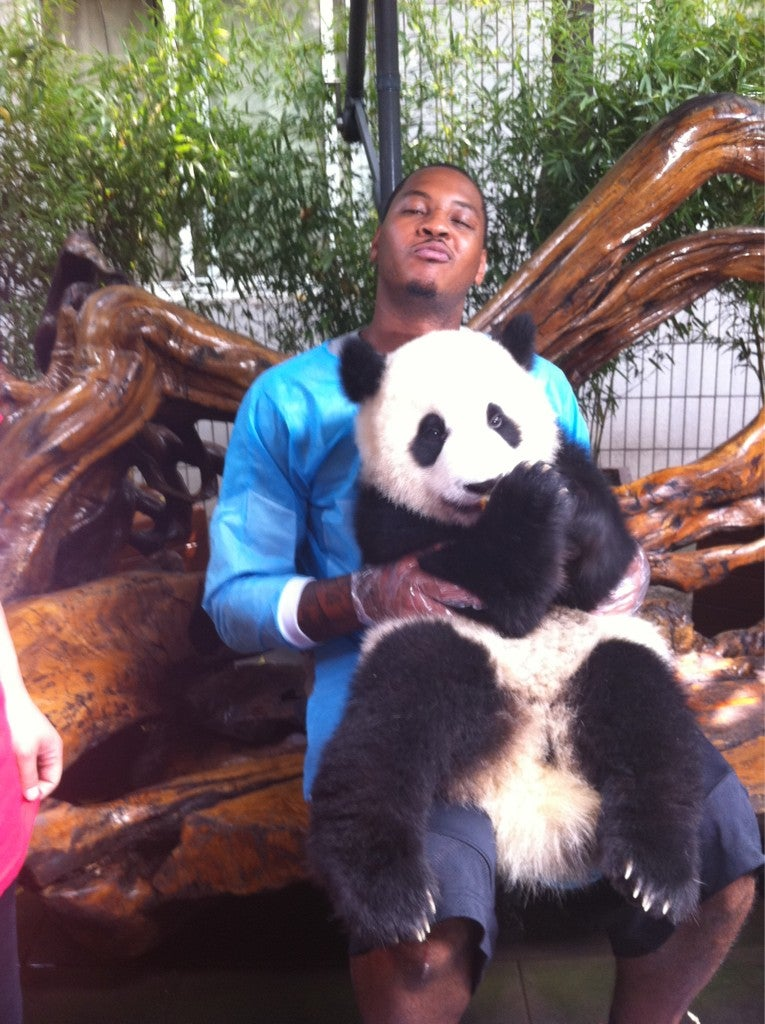 Carmelo Anthony Is The Panda Whisperer