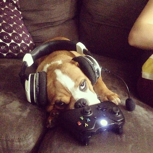 Look At These Dogs And Cats Confused By Xbox One