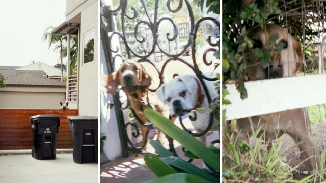 Mailman Blogger Chronicles the Dogs Who Want to Eat Him