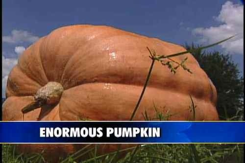 Good Luck at Your Crappy Thanksgiving With No Tasty Pumpkins or Eggo Sandwiches