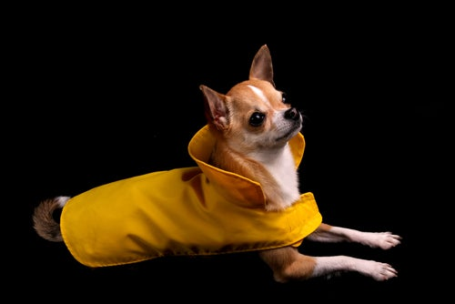 People Think Their Pets Can Predict the Weather