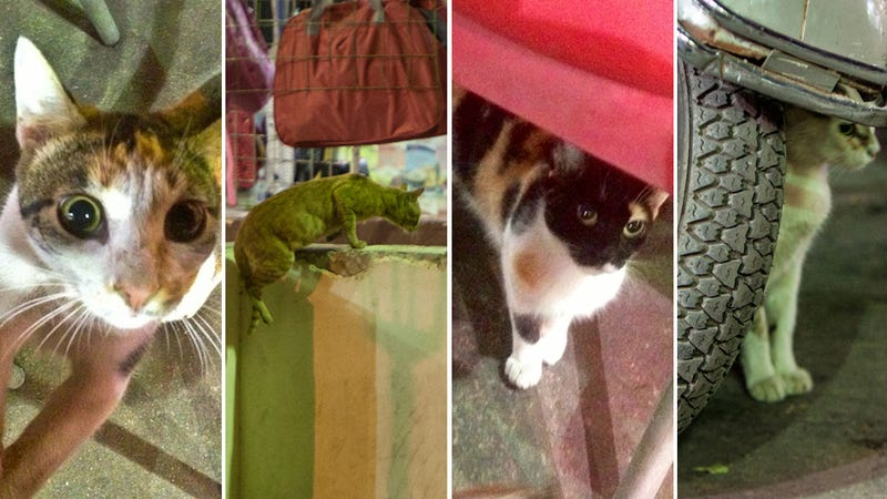 Dispatches From Cairo: Egypt's Gangsta Kittens