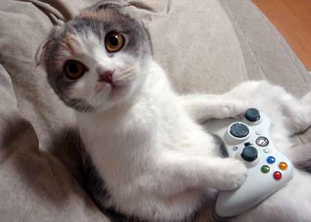 Cats Are Very Serious about Video Games