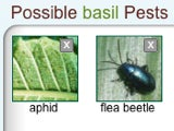 Garden Pest Detective Sleuths What Pests or Diseases Are Killing Your Plants