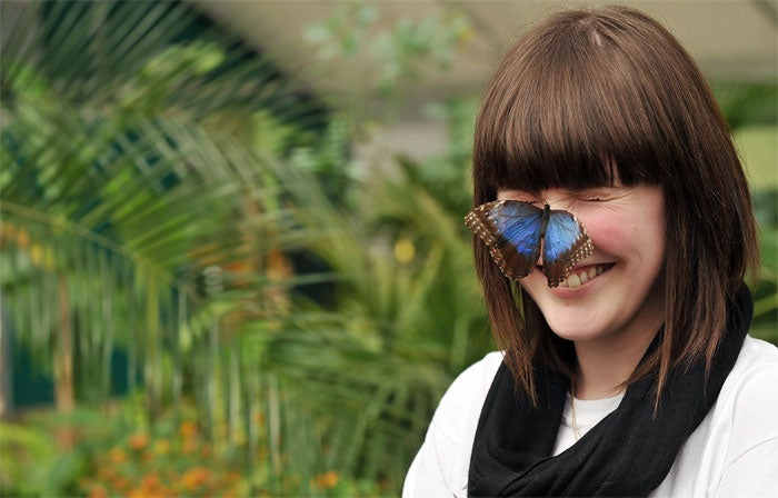 Half Male, Half Female Butterfly Hatches At Natural History Museum